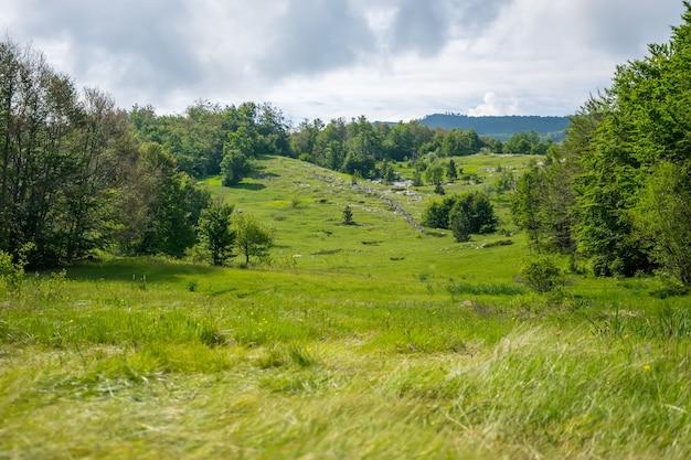 햇볕이 잘 드는 녹색 초원은 명상하기에 좋은 곳입니다.