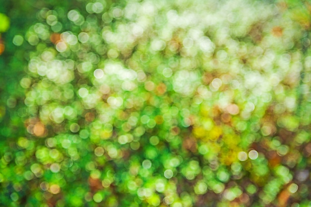 Green sunny nature bokeh background