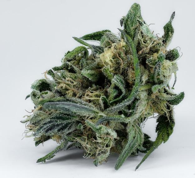 Зеленое запутанное растение на белом