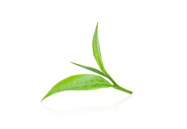 흰색 배경에 고립 된 녹차 잎