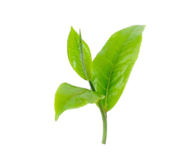 緑茶の葉は白い背景で隔離。
