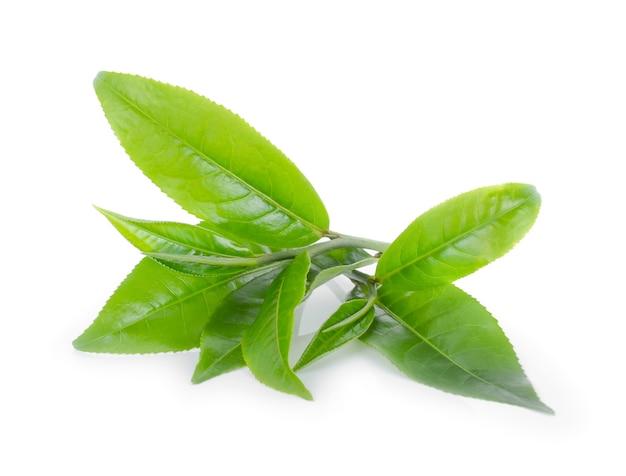 Лист зеленого чая, изолированные на белом фоне.