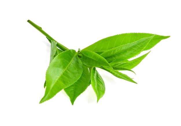 Лист зеленого чая, изолированные на белом фоне