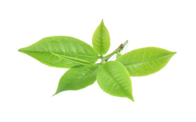 Лист зеленого чая, изолированные на белом фоне Premium Фотографии