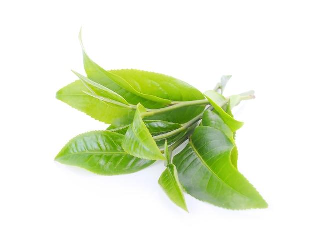 Лист зеленого чая, изолированные на белой поверхности.