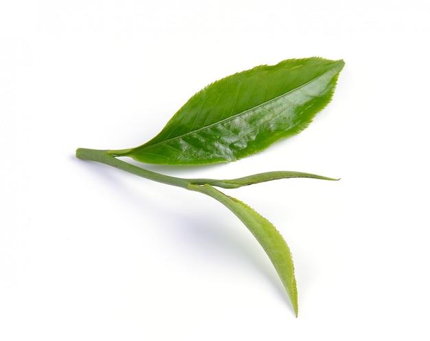 흰색 표면에 고립 된 녹차 잎