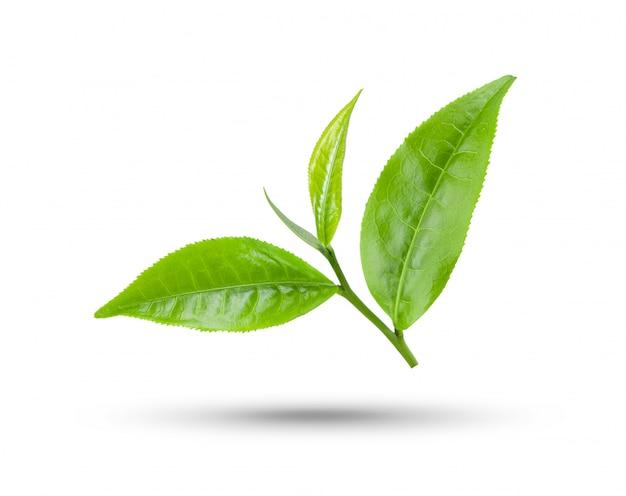 녹차 잎 흰색 절연