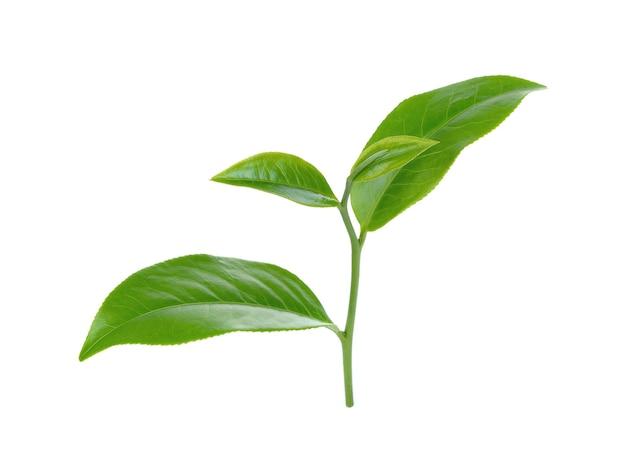 Лист зеленого чая, изолированные на белом.