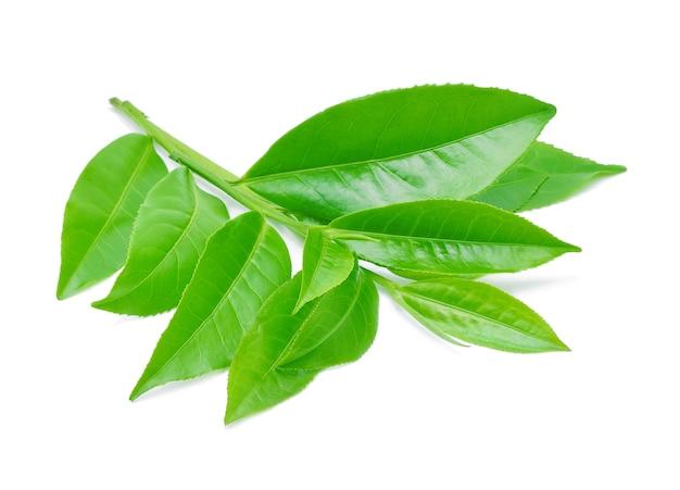 白で分離された緑茶の葉