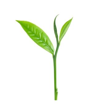 白で隔離される緑茶葉