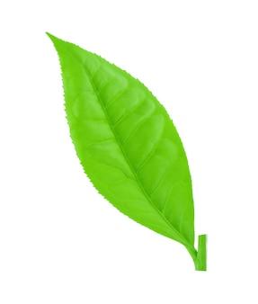 녹차 잎 흰색 절연입니다.