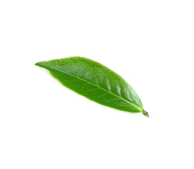 白で分離された緑茶の葉 Premium写真