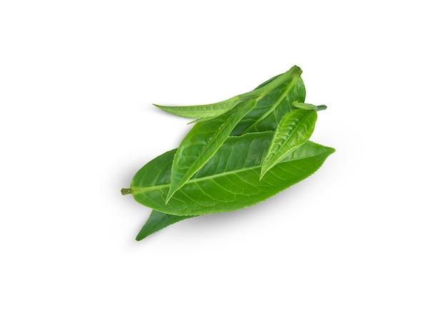 녹차 잎 절연