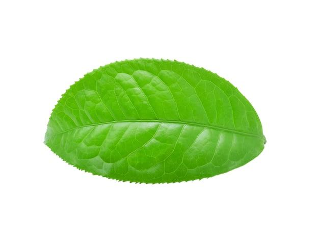 Лист зеленого чая изолированные