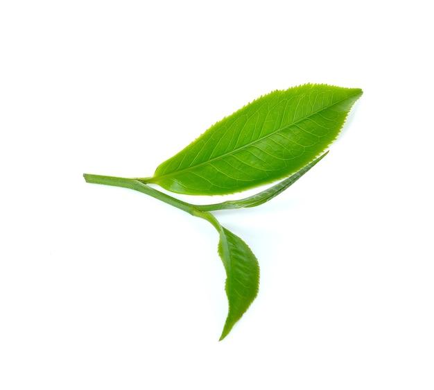 白い背景の上の緑茶の葉