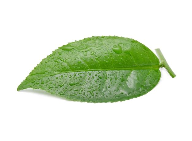 Лист зеленого чая с каплями воды.