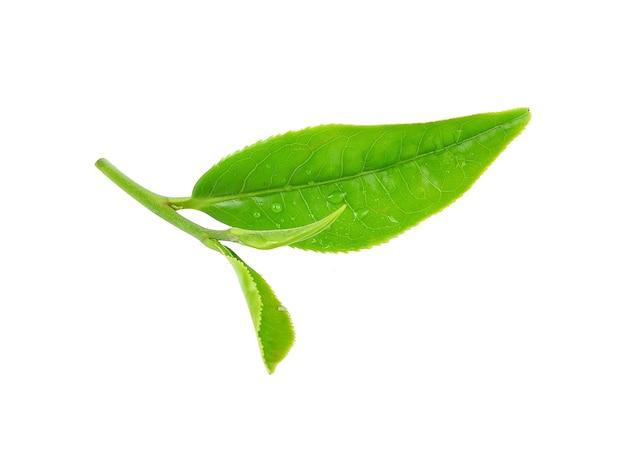 Листья зеленого чая крупным планом изолированные