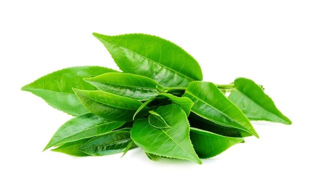 Листья зеленого чая изолированные
