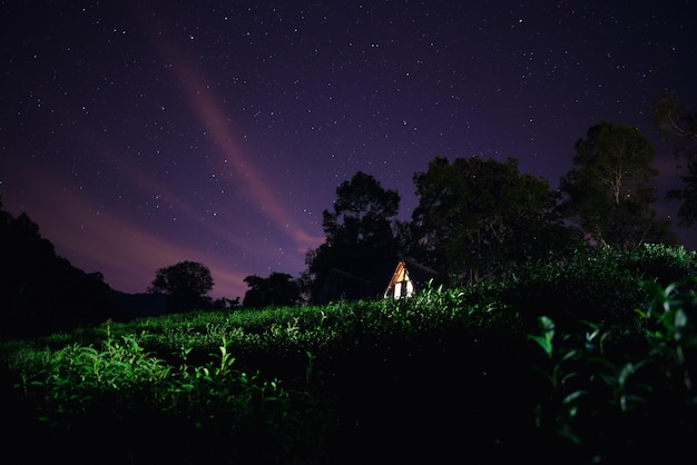 Green tea plantation under the star sky with wooden cottage.
