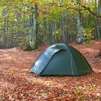 黄色い秋の森の緑のテント