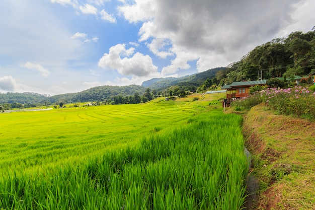 Green terraced rice field in mae klang luang , mae chaem, chiang mai, thailand