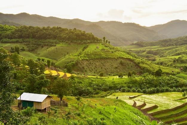 Green terraced rice field in nan