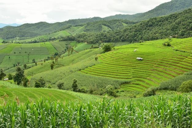 Green terraced rice field at pa bong piang village