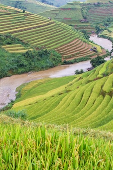 Green terraced rice fields at mu cang chai