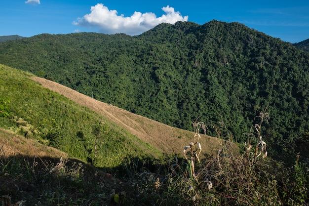 Green terraces corn and rice field on mountain in nan, boklua nan province, thailand