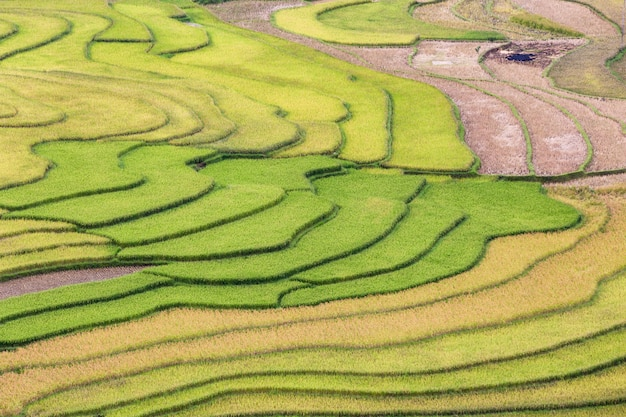 Green terraces rice field at mu cang chai