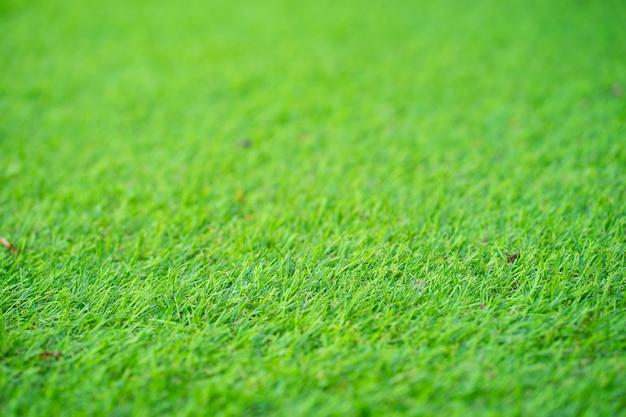 Зеленый, текстура, фон, трава в солнечном свете. в качестве фона.