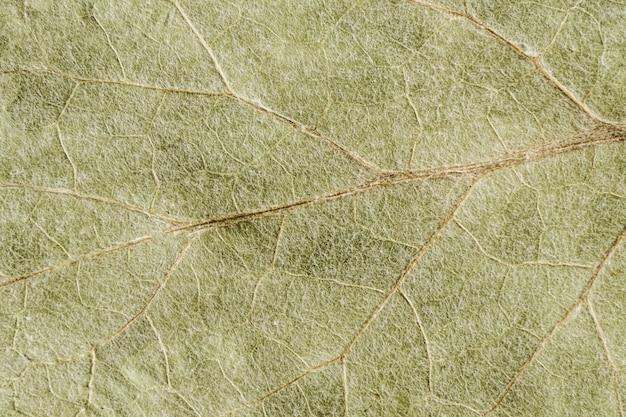 마른 잎의 녹색 질감