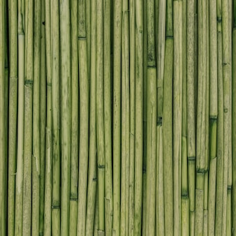 Green texture of reeds or bamboo for background