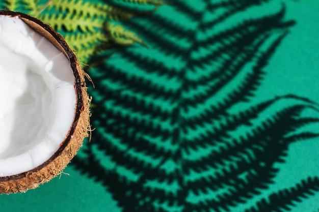 열대 그늘과 코코넛이 있는 녹색 질감. 벽 잎 식물 그늘 배경 최소한의 개념 flatlay 야자 자연과 여름 열대 해변 여행