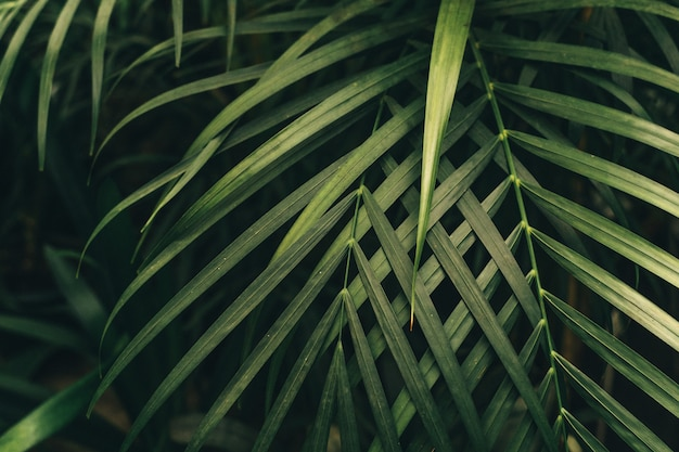 Green thin palm leaves plant growing in the wild, tropical forest plants, evergreen vines abstract color