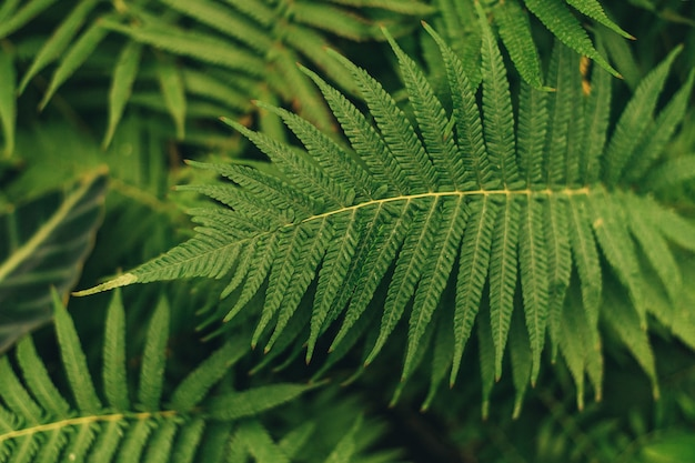 Green thin palm leaves plant growing in the wild, tropical forest plants, evergreen vines