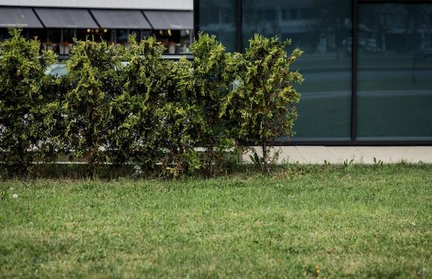 Зеленая туя. декор придомовой территории. дом и сад. благоустройство территории. дом для отпуска.