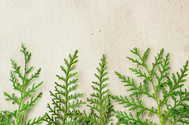Green thuja tree branches frame on beige rustic background.