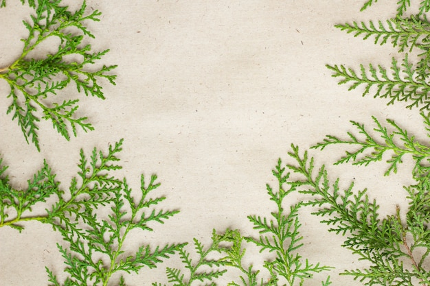 Green thuja tree branches frame on beige rustic background,