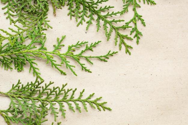 ベージュの素朴な背景に緑のクロベの木の枝フレーム。自然な針の背景、明るい常緑の質感、コピースペース