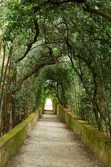 イタリア、フィレンツェ、ボーボリ庭園の緑の木々の路地