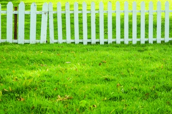 Green tree and green grass in garden wood fence