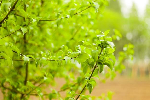 緑の木と葉の背景、昼間