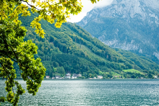 Зеленая ветка дерева с видом на широкое озеро траунзее гмунден и высокие горы