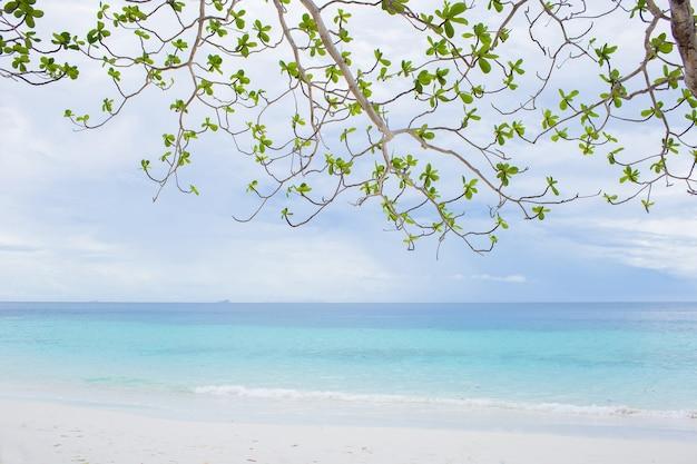 青い空と海を背景に緑の木の枝。