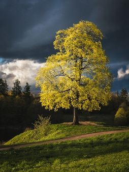 Green tree under the clouds