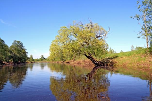 Green tree on coast river