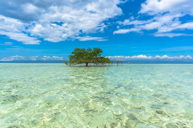 Green tree in crystal clear waters in the middle of the sea on a beautiful background