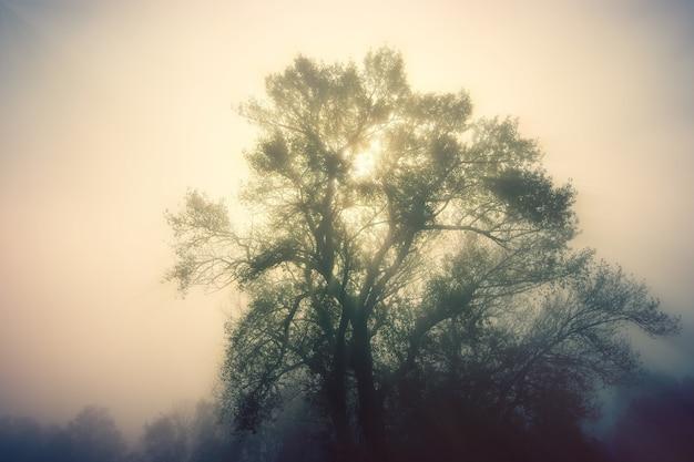昼間の緑の木