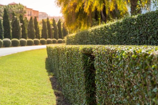 Green tree fence